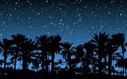 Palmen unter Sternen Stockbild