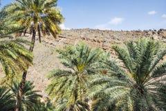 Palmen van Misfah Abreyeen Stock Foto