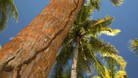 Palmen vanuit lage invalshoek stock footage