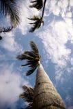 Palmen vanuit lage invalshoek stock afbeelding