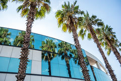 Palmen in vensters van de bouw worden weerspiegeld die Stock Fotografie