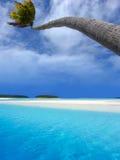 Palmen-Verbiegen Stockbild