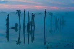 Palmen, Vögel und Nebel Stockfotografie