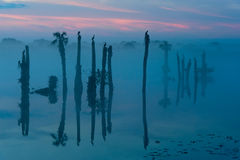 Palmen, vogels en mist Stock Fotografie