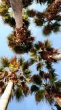 Palmen vom Boden lizenzfreie stockfotografie