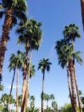 Palmen von Arizona Stockfoto