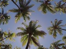 Palmen von oben Lizenzfreies Stockbild