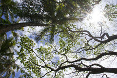 Palmen von unterhalb Stockfoto