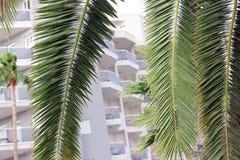 Palmen vor einem Hotel lizenzfreie stockfotos