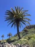 Palmen vor tiefem blauem Himmel Lizenzfreies Stockbild