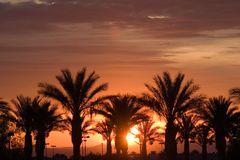 Palmen während des Las- Vegassonnenaufgangs Stockfotos