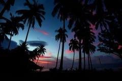 Palmen während des Sonnenuntergangs Stockbild