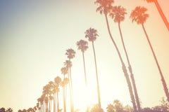 Palmen in zonsonderganglicht in Santa Barbara stock foto
