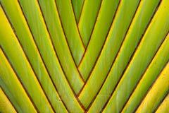 Palmen-Zweig-Zusammenfassung Lizenzfreies Stockbild