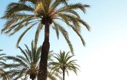 Palmenachtergrond Stock Foto