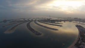 Palmenansicht von der Luft früh morgens stock video