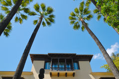Palmenbalkon Stockbild