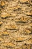 Palmenbarkenbeschaffenheit Stockfoto