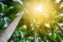 Palmenbaumaste Stockbild