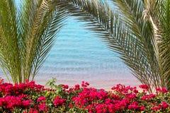 Palmenbaumaste auf dem blauen Seehintergrund Lizenzfreie Stockbilder