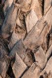 Palmenbaumrinde lizenzfreies stockfoto