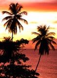 Palmenbomen bij zonsondergang, Tobago. Stock Foto's