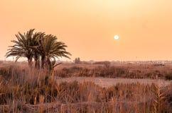 Palmenboom met zon achter een zandstorm Stock Fotografie