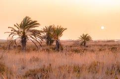 Palmenboom met zon achter een zandstorm Royalty-vrije Stock Afbeelding
