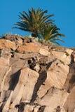 Palmenboom op een rots Stock Foto's