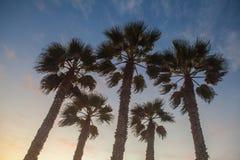 Palmenboom op strand en zonsondergang in Californië Royalty-vrije Stock Afbeeldingen