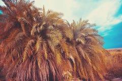 Palmenbosje, de oase in de woestijn stock foto's