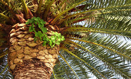 Palmendetail Stockfotografie