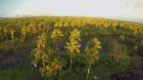 Palmendschungel bei Sonnenuntergang am Fuß des Vulkans Mayon philippinen stock video