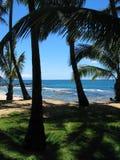 Palmenfarbton stockbilder