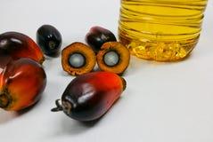 Palmenfrüchte und Palmöl, eine Frucht wird geschnitten, um seinen Kern zu zeigen Lizenzfreie Stockfotos