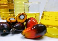 Palmenfrüchte und Palmöl, eine Frucht wird geschnitten, um seinen Kern zu zeigen Lizenzfreies Stockfoto