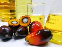 Palmenfrüchte und Palmöl, eine Frucht wird geschnitten, um seinen Kern zu zeigen Stockbild