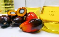 Palmenfrüchte und Palmöl, eine Frucht wird geschnitten, um seinen Kern zu zeigen Lizenzfreie Stockfotografie