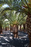 Palmengarten   Lizenzfreie Stockfotografie