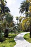 Palmengasse Lizenzfreies Stockbild