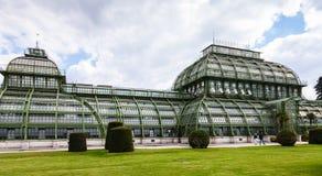 Palmenhaus-Palmen-Hauspavillon Schonbrunn-Garten Stockfotografie