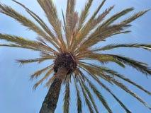 Palmenhimmelblau lizenzfreie stockfotos