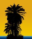 Palmenhintergrund Stockbild