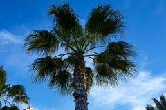Palmeniederlassungen sommerzeit lizenzfreie stockfotografie