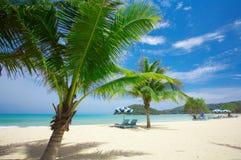 Palmenküste Lizenzfreie Stockfotografie