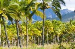 Palmenkawaii Hawaï Verenigde Staten Stock Foto's