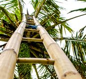 Palmenladder royalty-vrije stock foto