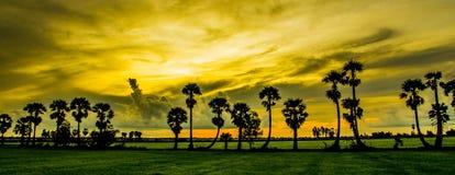 Palmenlocke stockbild