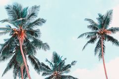 Palmenmening van onderaan Tropische fotoachtergrond De wilderniszomer royalty-vrije stock foto