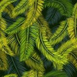 Palmenmuster 4 Stockbilder